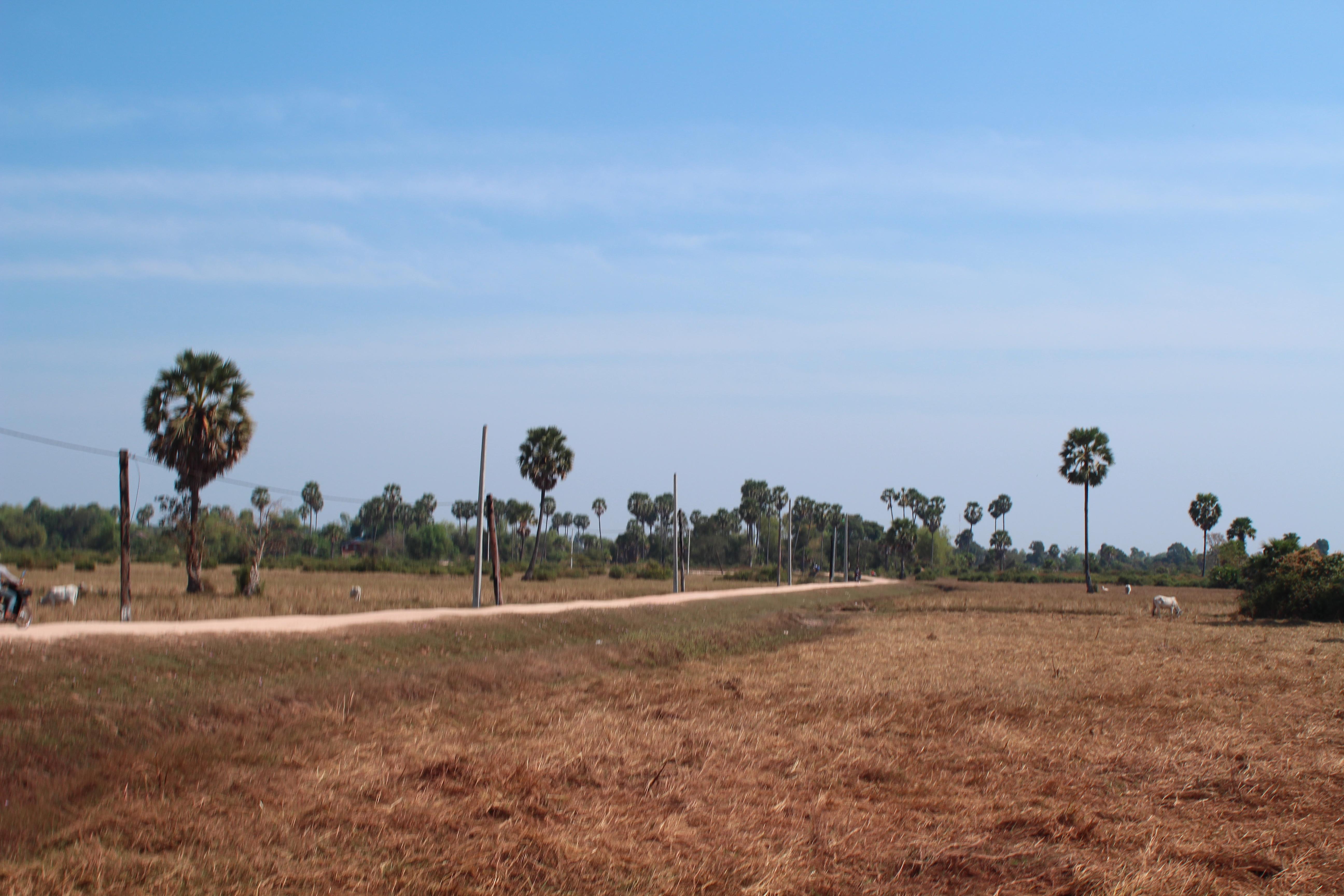 カンボジア 学校プロジェクト